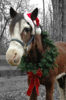 Happy Holidays from Sultan by MightySquirrel