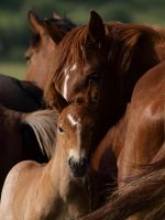 Little horse with mom by Lilia73