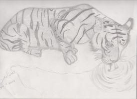 Tiger Drinking Water by brooke1110