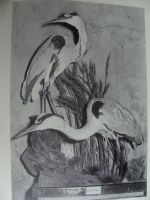 Old Taxidermy photo- Blue Herons by Lot1rthylacine