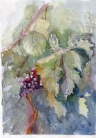 Grapes by AnnaBrick