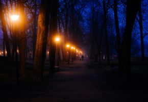 foggy park by dzorma