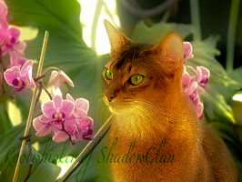 Rootwhisker Photo Edit by foxthepegasister