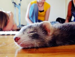 sLEEPY FERRET by DirtySeagulls
