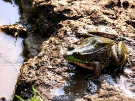Green Frog by MiaLeePhotography