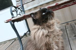 Crazy Whiskers by Meena-Charlie