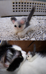 Wool Felting: Little Kitty Cat by GingaAkam