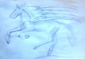 Pegasus 3 by Chequer