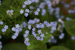 Baby Blue by LadyRStock