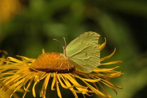 brimstone 2 by marob0501