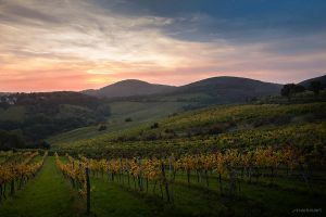 Autumn vineyards by Mariusart