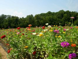 Colorfull Field of Flowers 5 by FairieGoodMother
