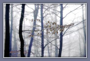 Winter trees II by kanes