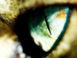 Cat's Eyes by sican