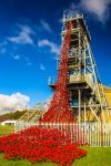 Woodhorn Poppies by newcastlemale