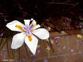 Flor 7 by SarahBob