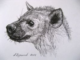 hyena by naitiron