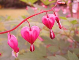 Bleeding Hearts by DiveEleanorDive