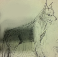 attempt to draw a wolf by Blitzoren
