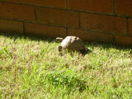 Tortoise in the Grass by BlackFlameVampire