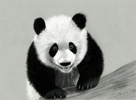 Panda colored pencil drawing by JasminaSusak