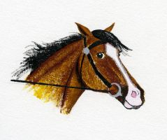 Racehorse head by crawdadEmily