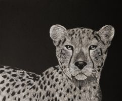 Cheetah Scratch Art by KatNap8181