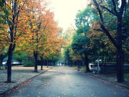 autumn is comming by dolfii