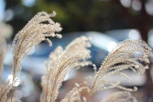 Airy Fronds by AtomicBrownie