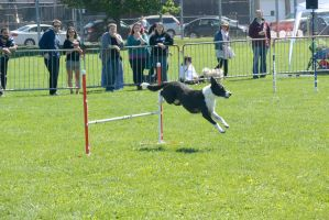2014 Dog Festival, Agility Contest 18 by Miss-Tbones