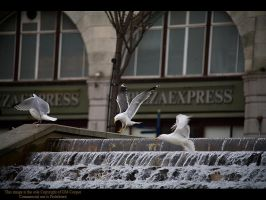 Gulls at play by GMCPhotographics