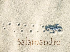 Salamandre by R0mainR