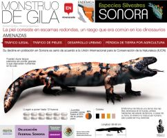 Gila Monster by memuco