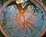 A World's Reflection by jahsi