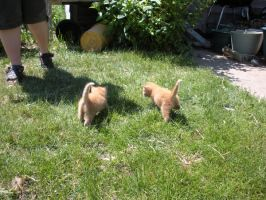 Kitties 06 by Empy-Stock