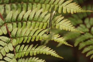 little dragonfly by rayna23