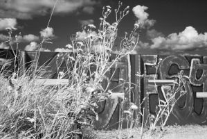 Infrared 2 by TLO-Photography