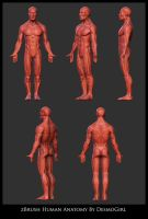zBrush Human Anatomy by DesmoGirl