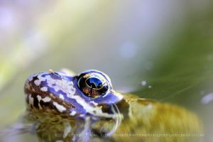 Mr Frog by StephiPhotography
