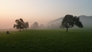 Sunrise meadow with trees 4 by SelvaStock
