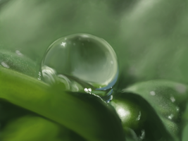 Speed Paint - Water Drop on Leaf by RoninDude