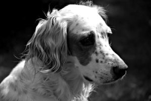 just another portrait of a dog by Honeycorn
