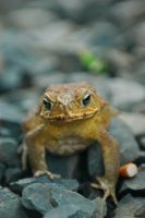 Toad by Lunkhead