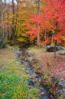 White Mountains  Fall Foliage  172 by FairieGoodMother