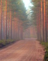 Country road a peaceful place to walk by KariLiimatainen