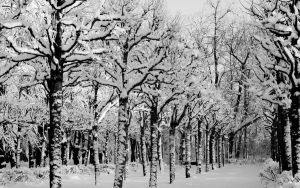 Winter park by Henrikson