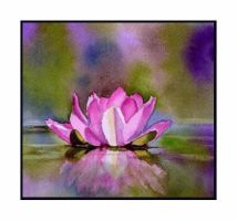 Water Lily Reflection by baglady