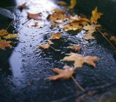 leaves by acollins973