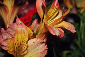 Tiger Lillies by amandaehr