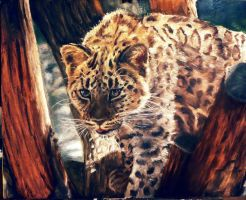 Leopard by Meorow